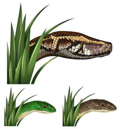 dangerous: Dangerous snakes in the bush illustration