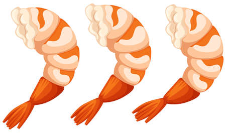 protein food: Cooked shrimps on white background illustration
