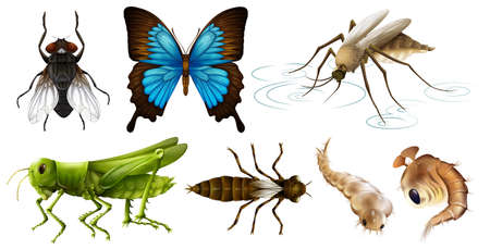 insect flies: Different types of insects illustration Illustration
