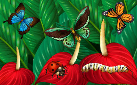 ladybird: Butterflies and other insects in garden illustration