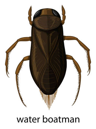 Water  boatman on white background illustration Illustration