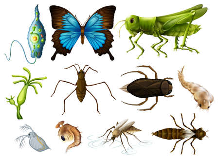 Different types of insects on white background illustration Illustration