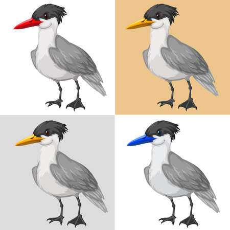 Pigeon bird on different color background illustration Illustration
