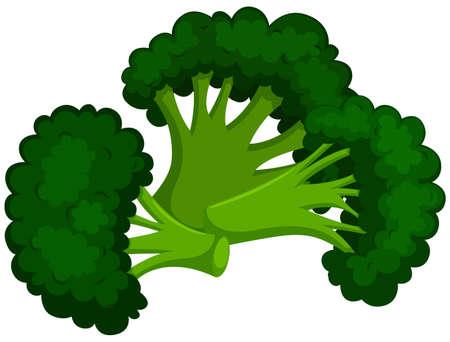 Green brocolli on white background illustration