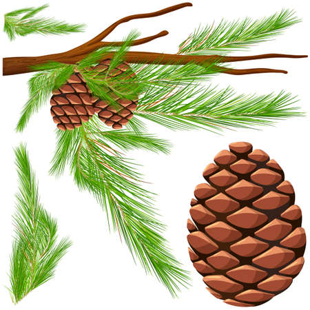 Pinecone on the branch illustration