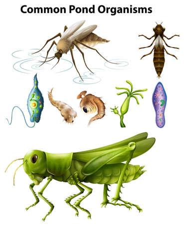 Diversi tipi di illustrazioni di organismi comuni di stagno