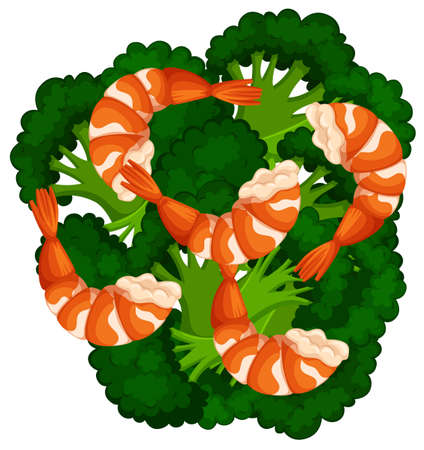 brocolli: Boiled brocolli and shrimps illustration Illustration