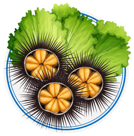 Fresh sea urchins and green vegetables on plate illustration