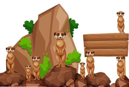 Wooden sign with meerkats on the rock illustration Illustration