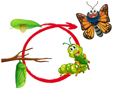 pupa: Life cycle of monarch butterfly illustration Illustration