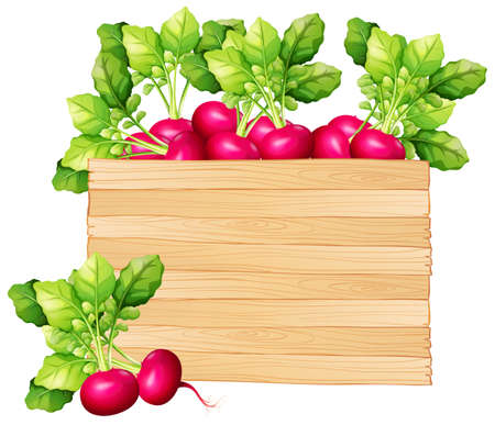 white background: Wooden board with red radish illustration Illustration