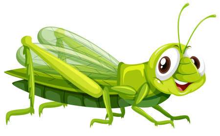 Little grasshopper on white background illustration Иллюстрация