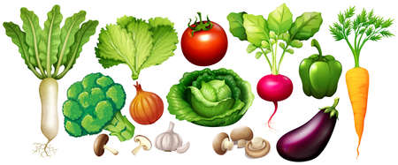 Different types of vegetables illustration Ilustrace