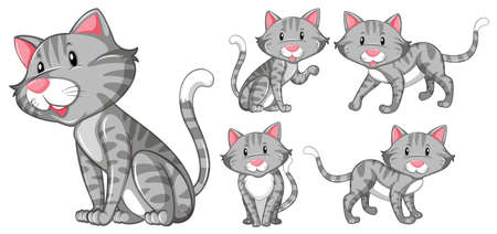 grey cat: Different actions of gray cat illustration