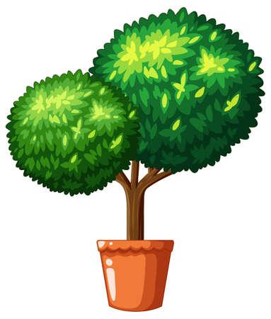 Bonsai tree in claypot illustration