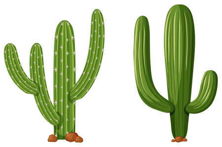 white background: Two types of cactus plants illustration