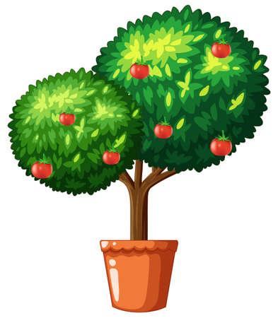 Tomatoes on small tree illustration Illustration