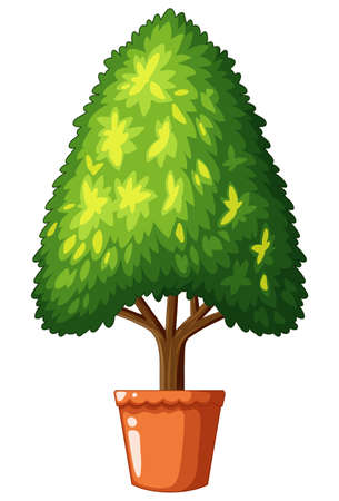 pinetree: Tree in claypot on white background illustration Illustration