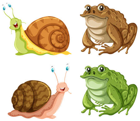 white background: Frogs and snails on white background illustration Illustration