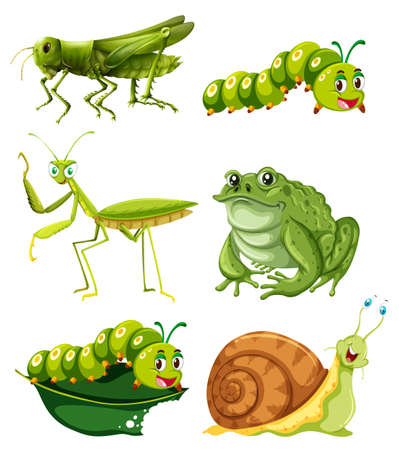 Different types of insects in green color illustration