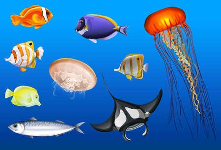 Different types of sea animals illustration