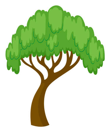 Willow tree on white background illustration