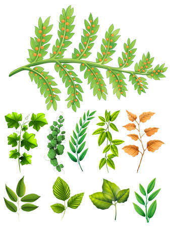 Different types of leaves illustration