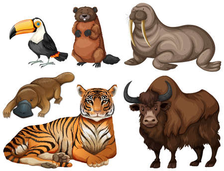 platypus: Different kinds of wild animals illustration