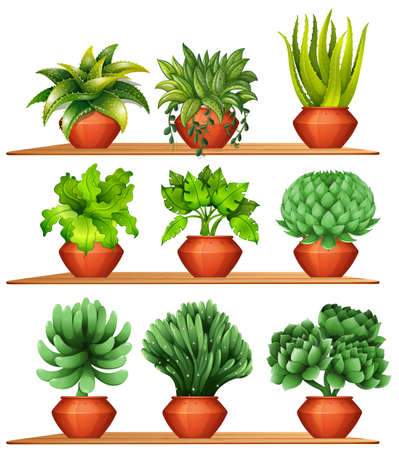 aloe vera plant: Different kinds of plants in clay pots illustration