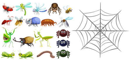 ladybird: Different types of bugs and spiderweb illustration