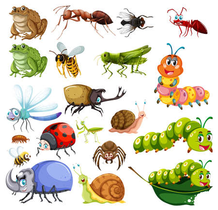 Different types of insects illustration Illustration