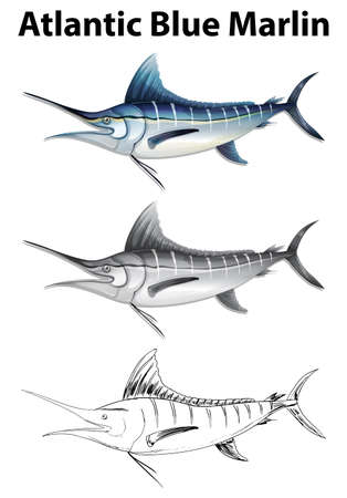 marline: Three drawing styles of atlantic blue marlin illustration