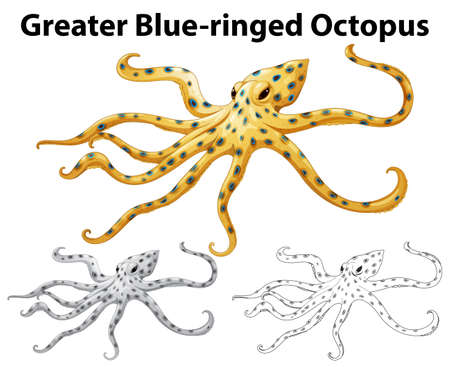Doodle animal for greater blue-ringed octopus illustration Illustration