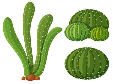 types of cactus: Three types of cactus plants illustration