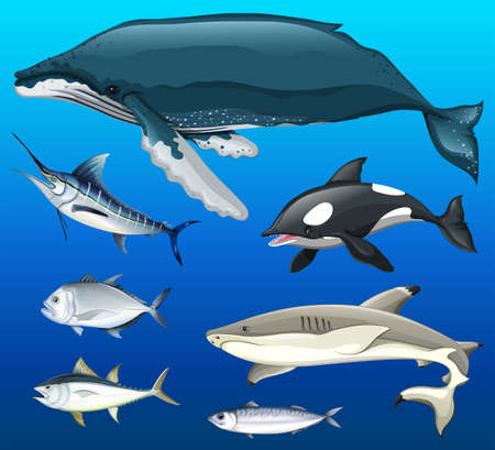 Different types of fish under the sea illustration Illustration