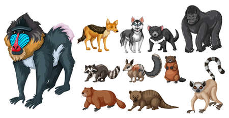 dingo: Different kinds of wild animals illustration