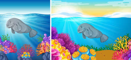 manatee: Two scene of manatee swimming under the sea illustration