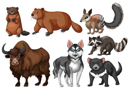 bull dog: Many types of wild animals illustration Illustration
