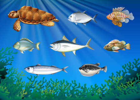 tropical: Fish and sea turtle under the sea illustration