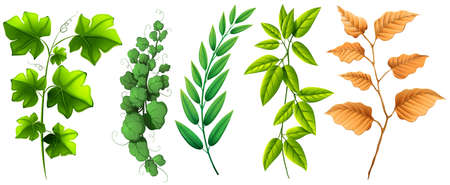 tree isolated: Different types of green leaves illustration