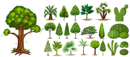 Different types of trees illustration Illustration