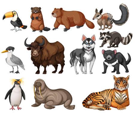 Los diferentes tipos de ilustración de animales salvajes