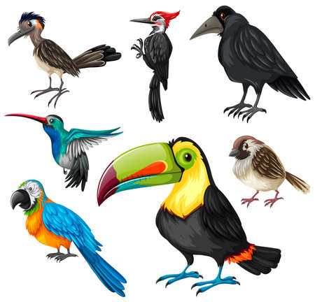 Different types of wild birds illustration
