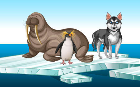 Walrus and penquin on iceberg illustration