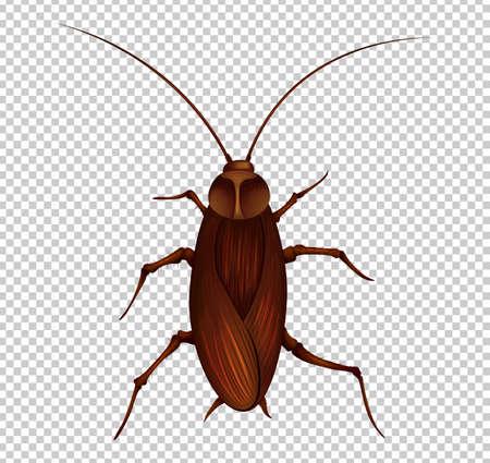 Bruine kakkerlak op transparante illustratie als achtergrond