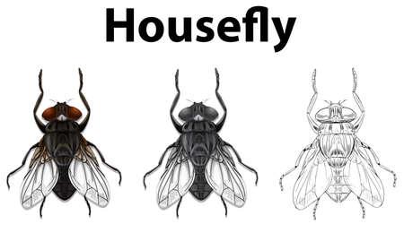 Doodle animal for housefly illustration