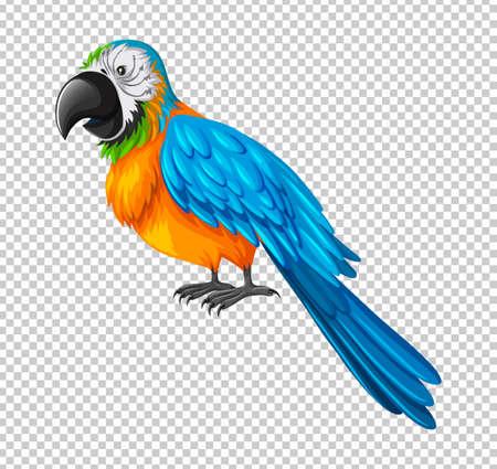 macaw: Colorful parrot on transparent background illustration Illustration