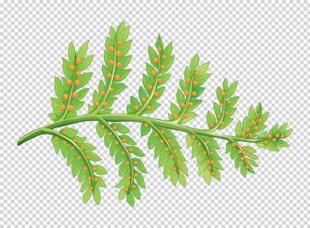 Leaves with little seeds illustration
