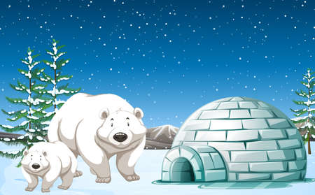 Polar bears standing near igloo at night illustration