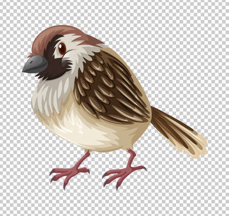 Sparrow bird on transparent background illustration